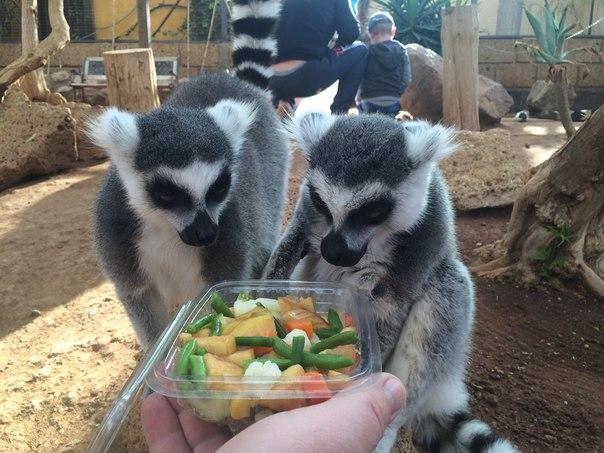 Парк Обезьян Monkey park, тенерифе